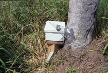 Ağaçtan koloninin alınması