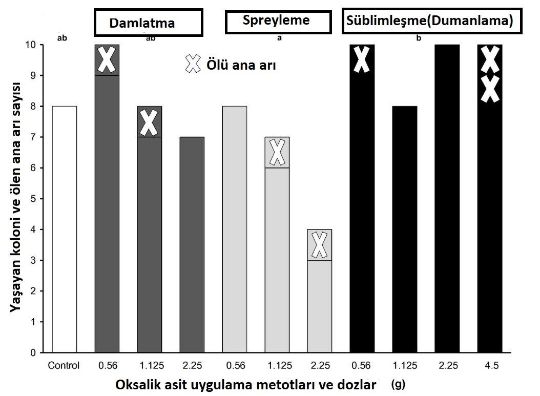 Oksalik asit Ölü koloniler ve ana arılar
