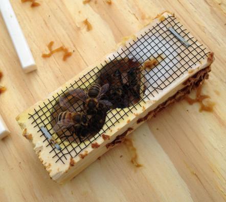 Ana arı taşıma kutu